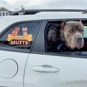 Vehicle Wrap Mutts